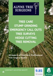 Tree Surgeons Chelmsford