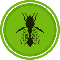 Domestic and commercial pest control in Chelmsford